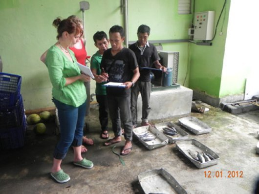 Training enumerators in port sampling skills. Simulation of boat unloading, requiring skills on identification of species, subsampling method and data recording.