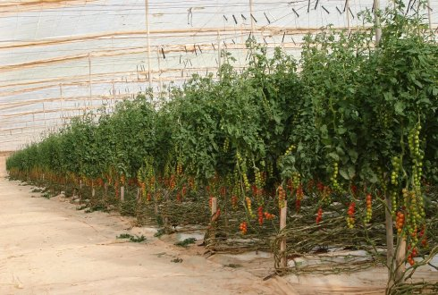 Working on more productive and sustainable horticulture in Morocco