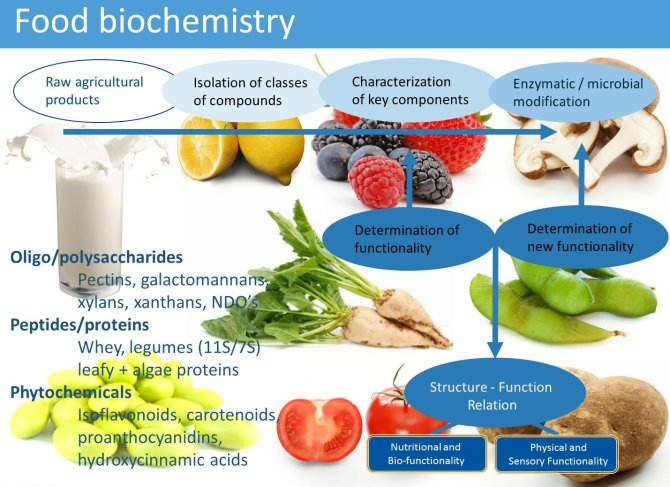 Food Chemistry research overview
