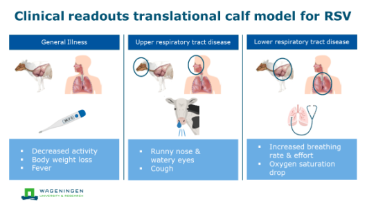 Clinical readouts translation calf model for RSV