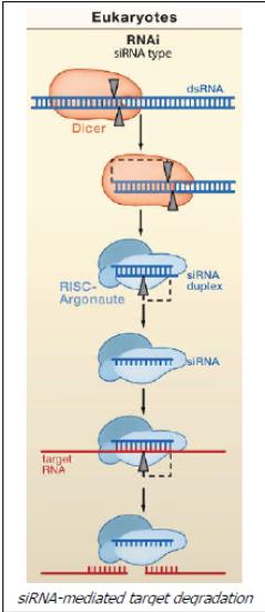 characterizing prokaryotic argonaute proteins