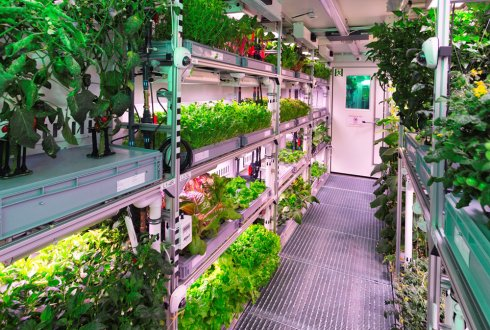 Greenhouses in space: down to earth