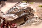 Integrated breeding programs for fish farming