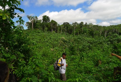 Secondary tropical forests sequester large amounts of carbon