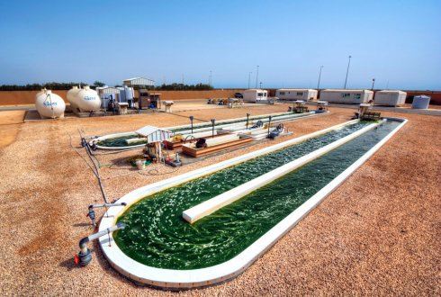 Enhancing Algae-based CO2 Capture and Sequestration for Large Scale Application in Qatar