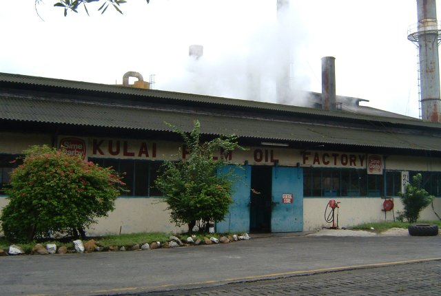 palm oil factory.jpg