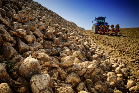 European project realises new value chains for sugar beet