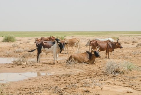 The time to act towards globally sustainable livestock is now