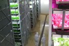 Vertical Farming in de glastuinbouw