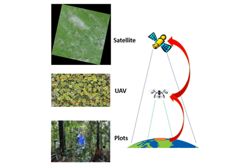 MSc thesis topics: Linking UAV and satellite imagery with