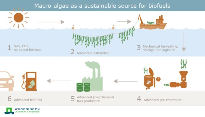 Macro-algae as a sustainable source for biofuels