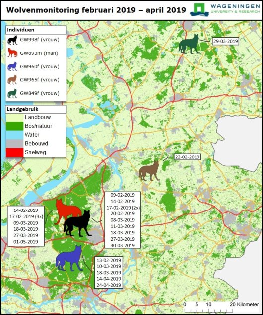 Map showing the movements of wolves in the Netherlands between 1 February – 1 May 2019. Source: Wageningen Environmental Research
