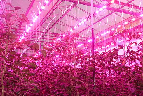 Lighting in greenhouses and vertical farms 2017