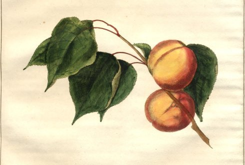 Historic fruit