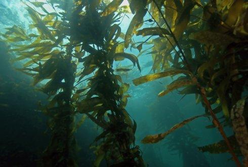 Plastic From Seaweed Wur