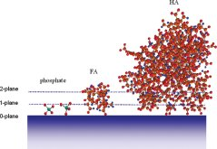 HA-FA-PO4 adsorption on goethite