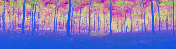 Hallerbos TLS scan (leaf off)