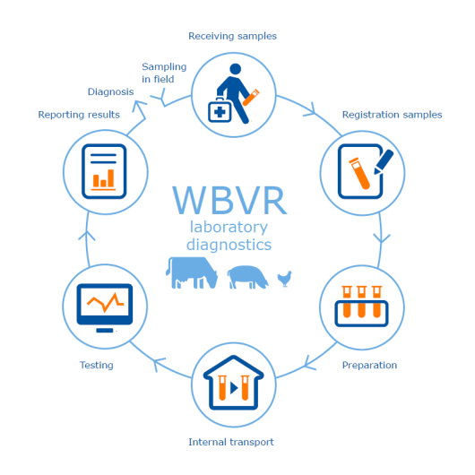 WBVR laboratory diagnostics.png