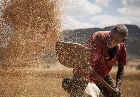 Integrated Seed Sector Development in Enthiopia
