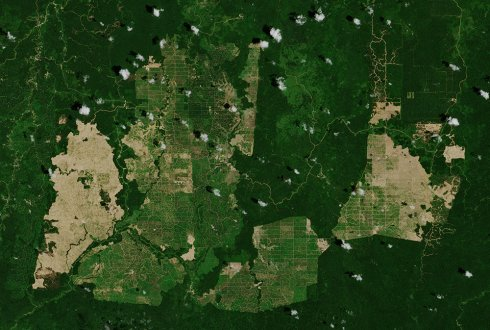 Palm oil industry to jointly develop radar monitoring to detect deforestation