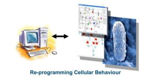 Re-programming Cellulair Behaviouring