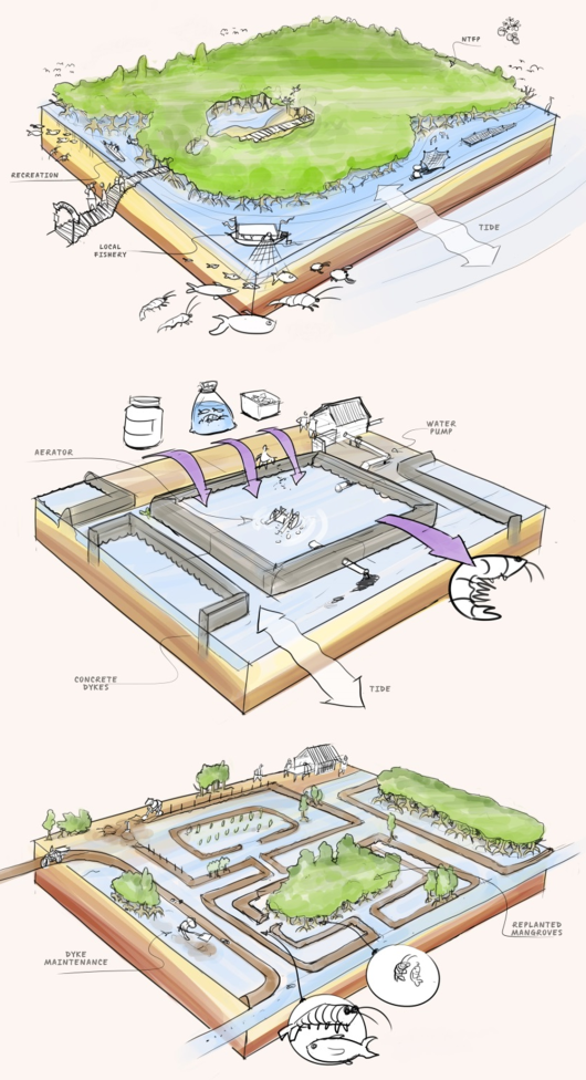 Examples of (from top to bottom) a protected mangrove forest, a mangrove forest converted for aquaculture pond and a 'hybrid' form in which mangrove replanting has been combined with sustainable shrimp farming. Illustration by Joost Fluitsma, JAM Visual Thinking (with permission)