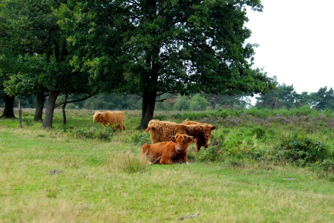 Grote grazers