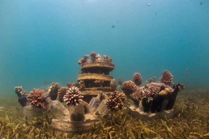 Reef restoration using bottle reefs. Photo: E. Knoester