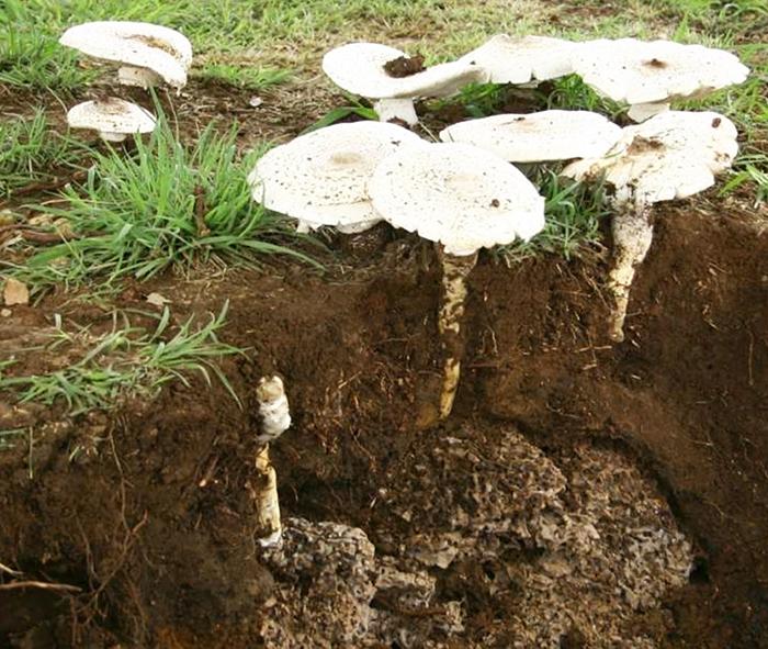 wat de landbouw kan leren van termieten en schimmels wur