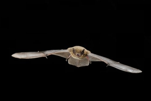Solutions for bat mortality due to wind farms