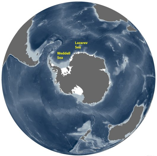 Map of Antarctica with the surrounding Southern Ocean in which the Weddell and Lazarev Seas can be found (map: NOAA climate.gov)