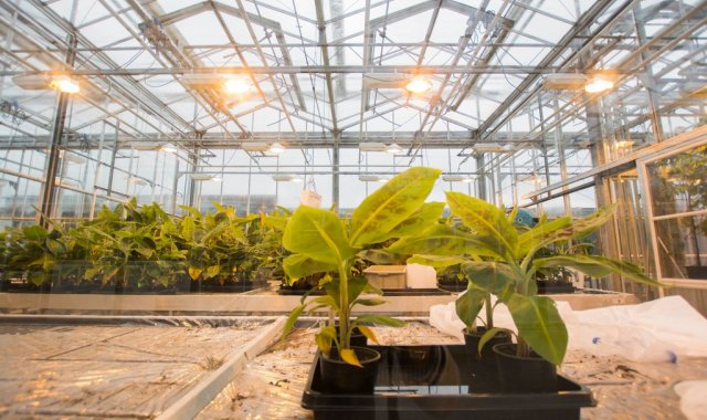 WUR is making use of smart solutions to limit greenhouse gas emissions