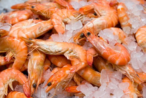Online seafood portal facilitates sustainable seafood trade