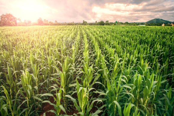 Improved crops can double European agriculture production