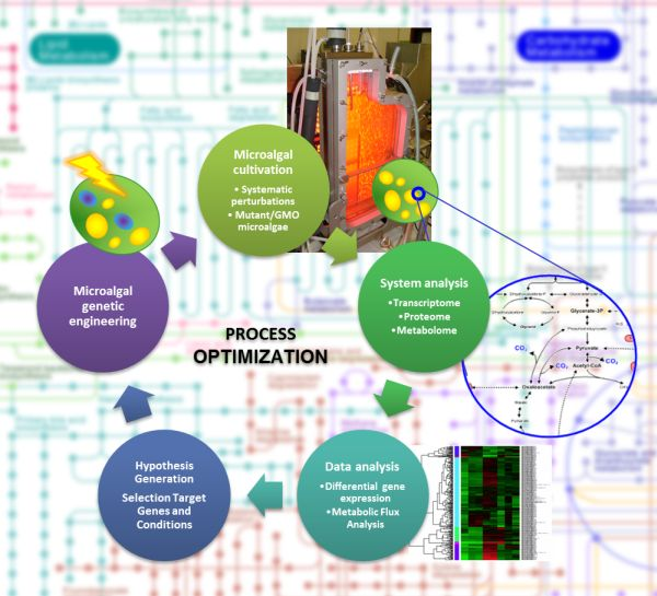 thesis on microalgae Microalgae is a biofuel crop that needs large amounts of water and nutrients in cultivation stage and requires excessive energy at the downstream processes.