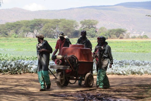 Pesticide Management in the East African Region: Kenya