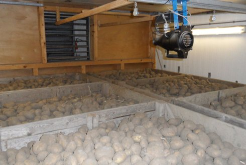 How to support potato storage for future demands