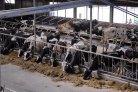 Lange termijn verwachting melkprijs €35,50