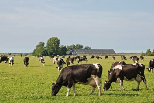Complexity in land use change; the case of the Dutch dairy sector
