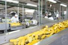 agro-food processing chains