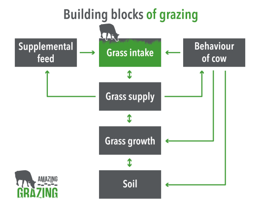 Grazing is amazing: this motto formed the starting point for the project.