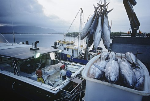 Tuna Fisheries Management and its impact on the Global Value Chain of the Tuna Canning Industry