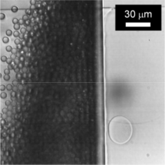 Fig. 3. Top view of the formation of monodisperse emulsion droplets in an EDGE device, in the presence of inorganic particles (dr. Olesya Bliznyuk).