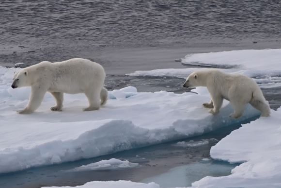 Walruses, polar bears and other Svalbard encounters