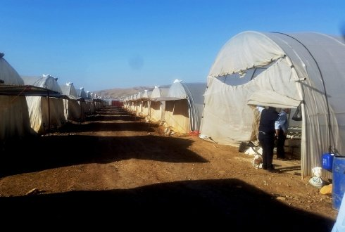 Protected horticulture for Syrian refugees in Jordan