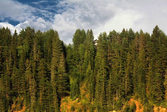 Climate-smart forestry