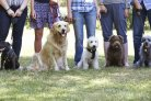 Parenting styles of dog owners focus on correcting, emotion or trainability of the dog