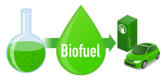 """Biofuel: Biomass fuel from algae, diagram illustration"""