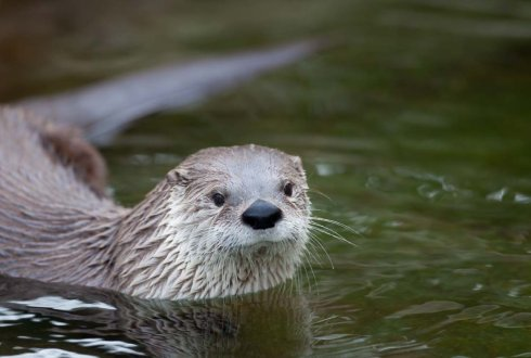 Animal adaptation and behavioural biology - WUR