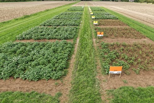 Extending IPM programmes with cultivation of cisgenic, late blight resistant potato varieties results in more sustainable potato production